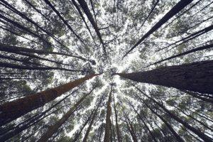 Niets in de natuur groeit kleiner
